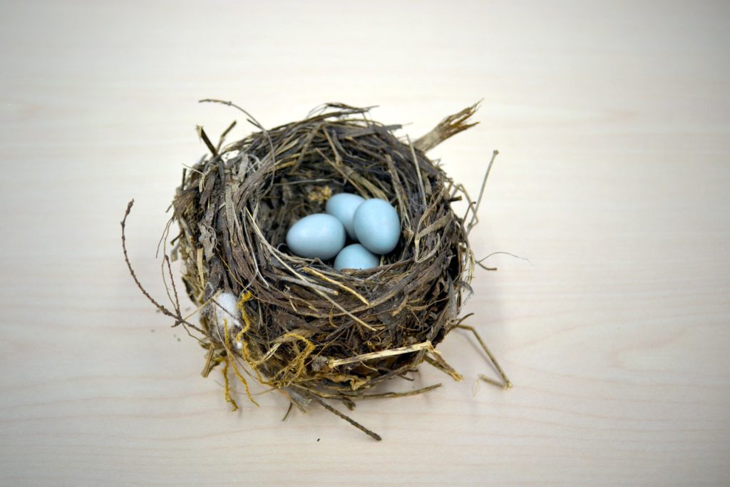 A natural bird's nest with four blue eggs in it.